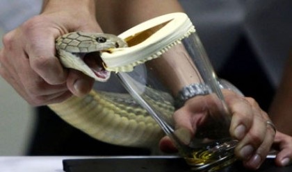 One held with snake venom in Dhaka
